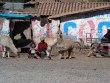 Cusco_Salkantay8