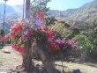 Cusco_Salkantay47